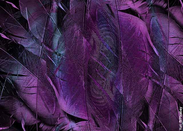 Foto de plumas color morado