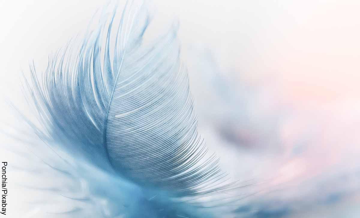 Foto de una pluma de tonalidad azul que revela el significado de las plumas