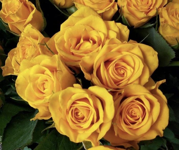 Foto de ramo de rosas amarillas