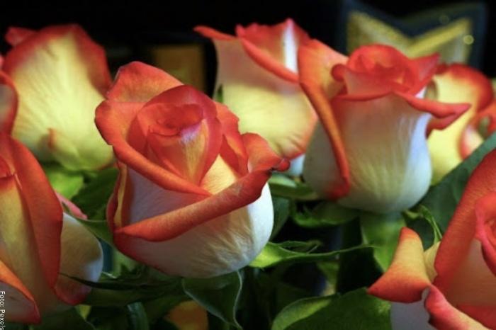 Foto de rosas amarillas con naranja