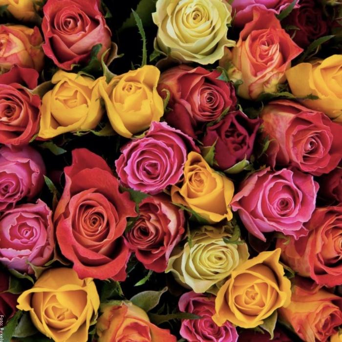 Foto de rosas de varios colores