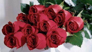 Significado de las rosas rojas, ¡descúbrelo!