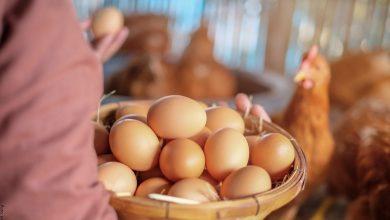 Significado de soñar con huevos, ¡tu día de suerte!