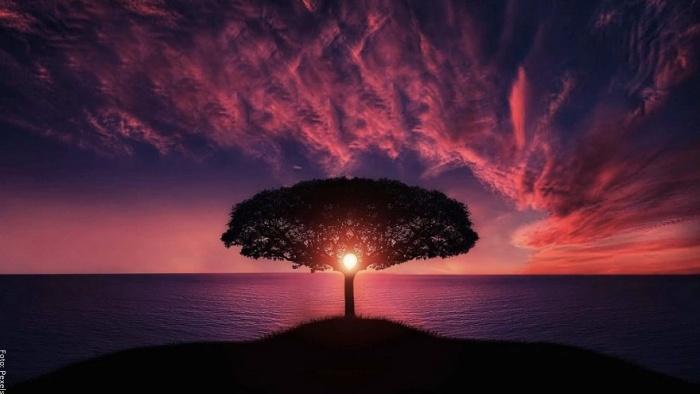 Foto del árbol de la vida en amor