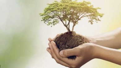 Significado del árbol de la vida, ¡aprende a interpretarlo!