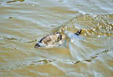 Foto de un pez en un río sucio que revela lo que es soñar con agua turbia