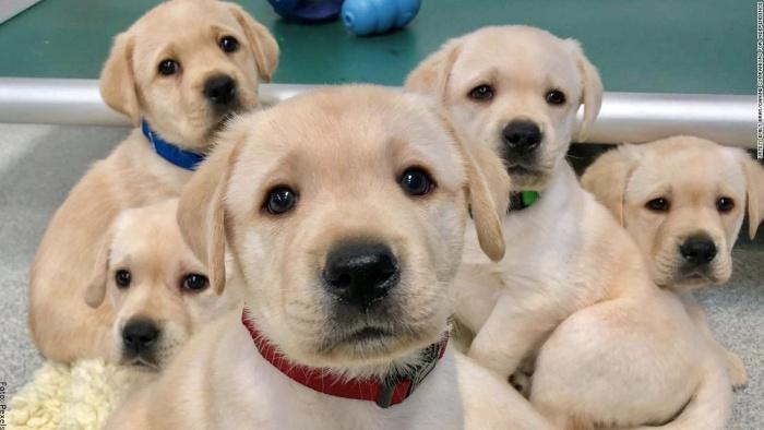 Foto de cachorros