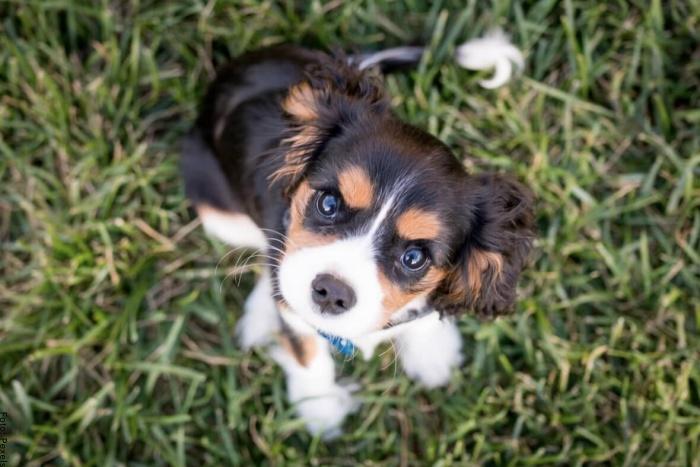 Foto de un cachorro