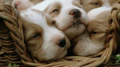 Soñar con cachorros, ¡extraño pero positivo!