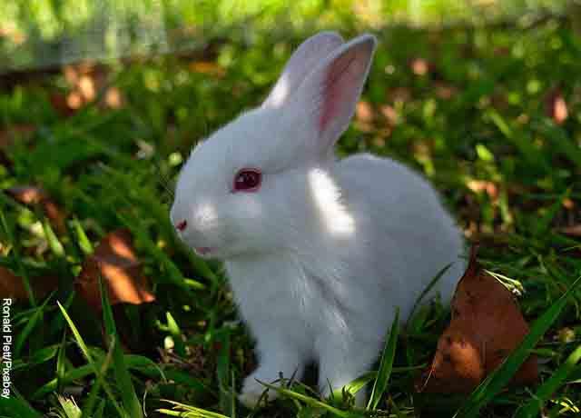 Foto de un conejo sentando el pasto