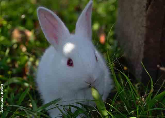 Foto de un conejo sentado en un campo