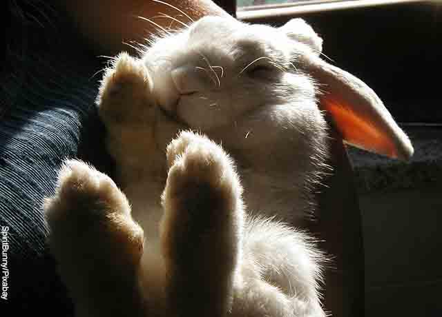 Foto de un conejo acostado durmiendo