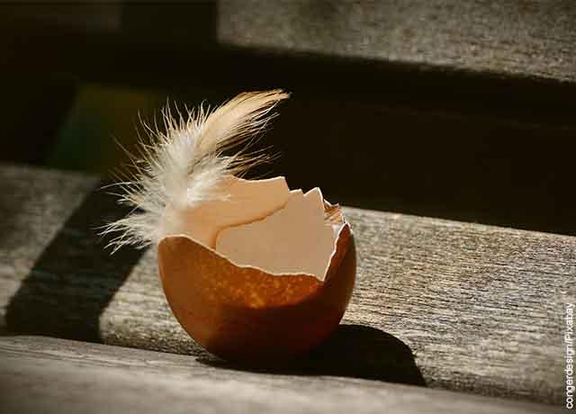 Foto de una pluma en un huevo