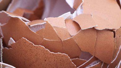 Foto de un huevo con las cáscara despedazada que revela lo que es soñar con huevos rotos