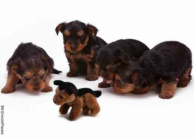 Foto de varios cachorros negros sentados
