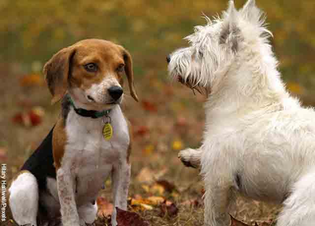 Foto de dos perros jugando en el parque que muestra lo que es soñar con perros cachorros