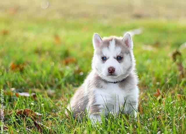 Foto de un cachorro sentado en el pasto