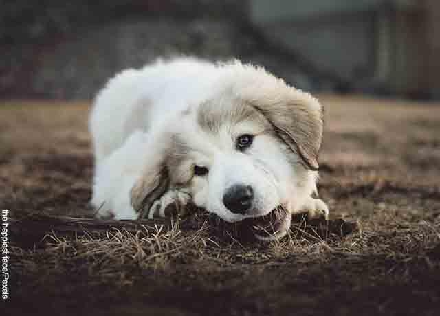 Foto de un perrito jugando con un palo