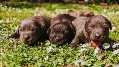 Foto de tres perros recién nacidos en el parque que revela lo que es soñar con perros cachorros