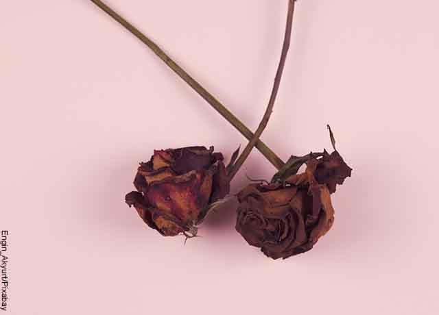 Foto de rosas marchitas sobre una mesa