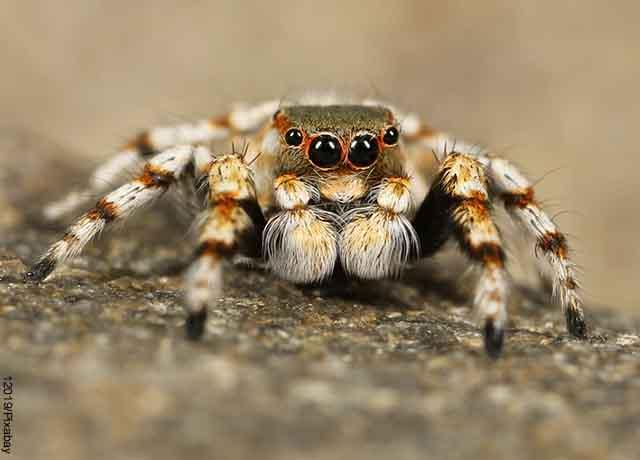 Foto de una araña blanca