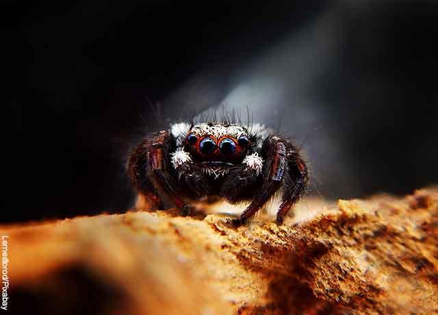 Foto de una pequeña araña caminando